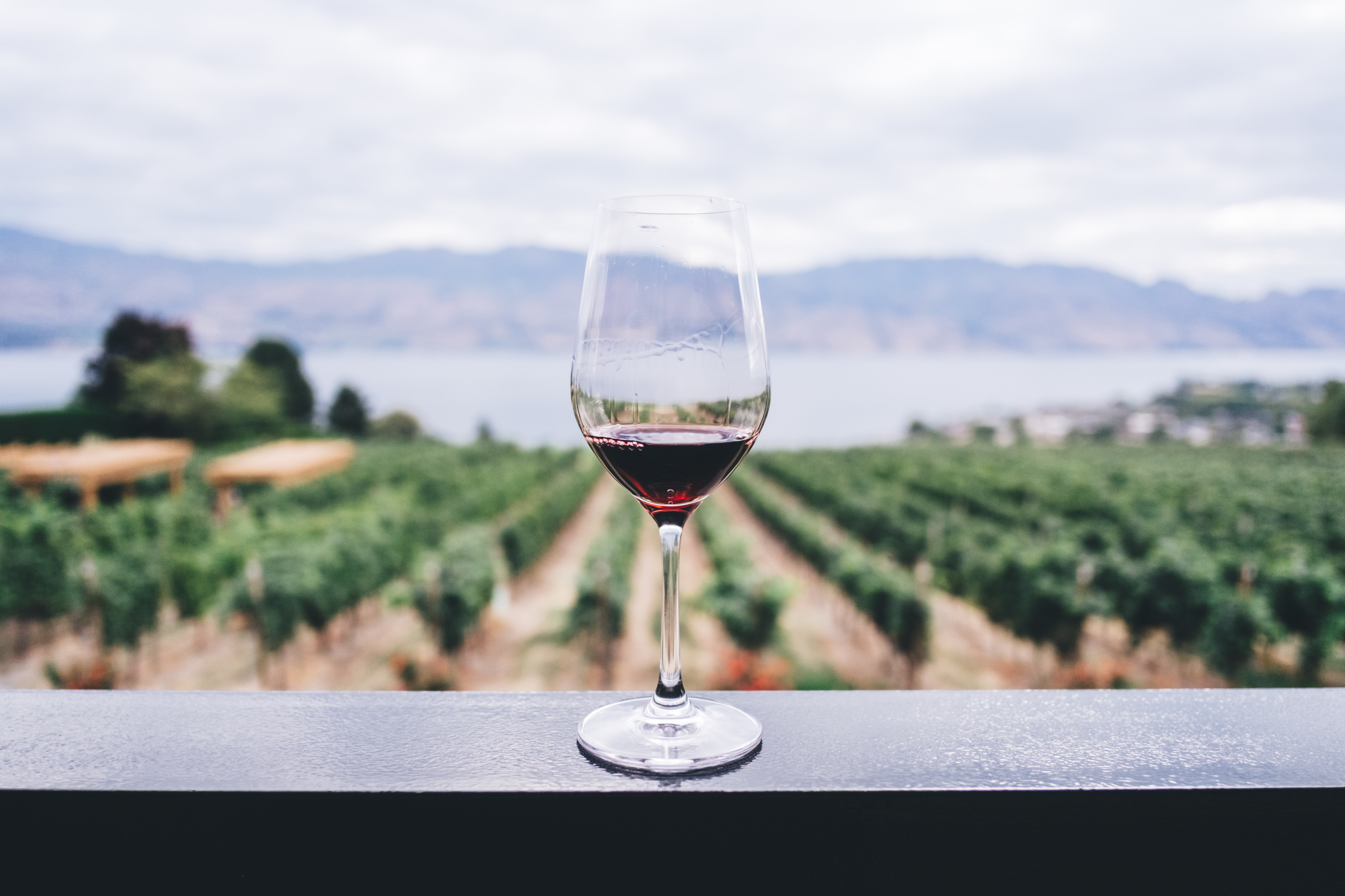 Red Wine in a glass overlooking a field