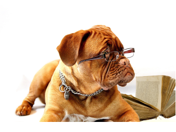Photo of a dog with glasses